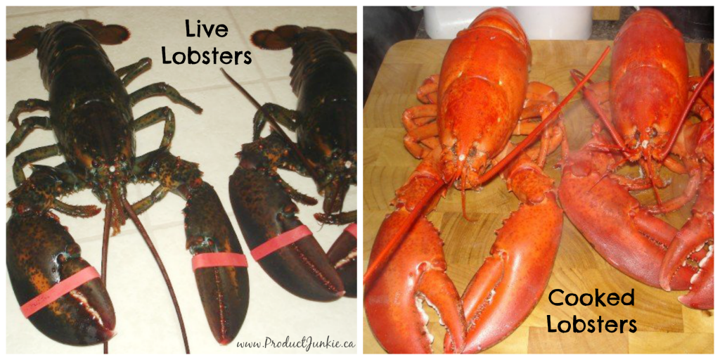 Live vs. Cooked Lobsters